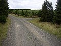 Forestry road in Harwood Forest - geograph.org.uk - 529003.jpg