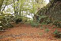 Forgotten road being reclaimed by nature - geograph.org.uk - 267911.jpg