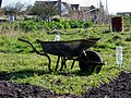 Friday Street allotments - geograph.org.uk - 10.jpg