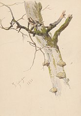 Study of Tree Trunk with Branches and Mushrooms