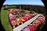 Front garden IMG 1809 (9520401452).jpg