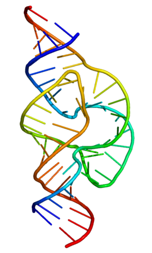 Full-Length Hammerhead Ribozyme color-coded so...