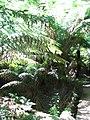 GOR Maits Rest Rainforest-3875262 143554496.jpg