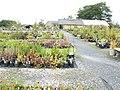 Garden Makers Plant Centre - geograph.org.uk - 503168.jpg