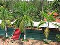 Garden Palm - അലങ്കാരപ്പന-1.JPG