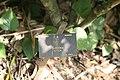 Gardenia Nitida plaque.jpg