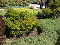 Gardenology-IMG 5144 hunt10mar.jpg