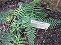 Gardenology.org-IMG 0789 rbgs10dec.jpg