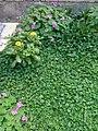 Gardens in Baghdad 40.jpg