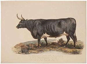 Board of Agriculture (1793–1822) - Image: Garrard Bovine print