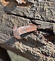 Gartlmühle, Gresten 04 - rusty nail.jpg