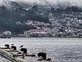 Gaviotas en el Puerto de Marín (8500394776).jpg