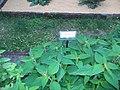 Giardino botanico di Brera (Milan 22.jpg