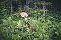 Gjensatt harv etter Ovrenvegen 09-07-19 1.jpg