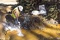 Gold King Mine - August 14, 2015 (20629475985).jpg