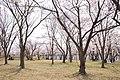 Gonoike Ryokuchi Park, Ibaraki 05.jpg