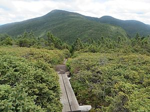 Goose Eye Mountain - Goose Eye from the southwest (Mahoosuc Trail)