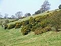 Gorses and Horses, near Upper Aston, Shropshire - geograph.org.uk - 378144.jpg