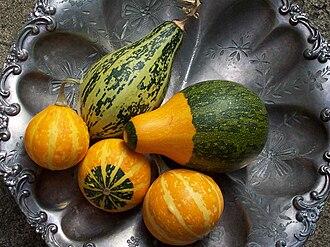 Gourd - Cucurbita pepo gourds grown in a suburban garden