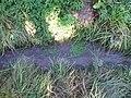 Graben Fetter Grund unterhalb Quelle Kirschenberg.jpg
