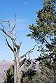 Grand Canyon Village, AZ 86023, USA - panoramio (1).jpg