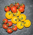 Grapes of red and yellow tomatoes.jpg