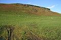 Grazing sheep below Boyken Craigs - geograph.org.uk - 1035922.jpg