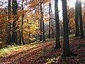 Great Wood, Hambleden - geograph.org.uk - 1050740.jpg