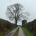 Green Lane in winter - geograph.org.uk - 1638943.jpg