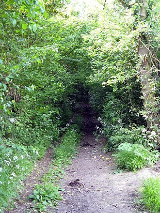 Green lane (road) - An overgrown green lane in Worcestershire.
