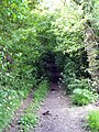Green Lane near Longley Green - geograph.org.uk - 813083.jpg