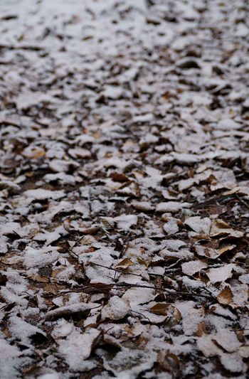 English: Fallen leaves in snow.