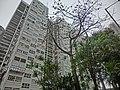 HK 北角半山 North Point Mid-Levels 雲景道 69-75 Cloud View Road 摩天大廈 Skycraper facade n trees Apr-2014.JPG