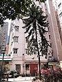 HK SYP 西環 Sai Ying Pun 德輔道西 Des Voeux Road West 西安里 Sai On Lane Children's Playground tree March 2020 SS2.jpg
