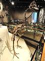 Hagryphus giganteus - Natural History Museum of Utah - DSC07248.JPG