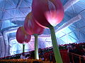 Haifa International Flower Exhibition P1140015.JPG