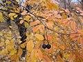 Haj Abdollah Mohamadi's Garden At Autumn (3) In Hajjiabad,Zeberkhan.jpg