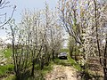 Hamadan Province, Do Rudan, Unnamed Road, Iran - panoramio (4).jpg