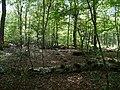 Hambach forest 44.jpg
