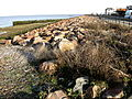 Hampton-on-Sea 027.jpg