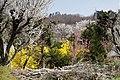 Hanamiyama (7246541586).jpg