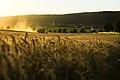 Harvest Season (220341233).jpeg