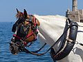 Head of carriage horse in Chania, Creta 02.jpg