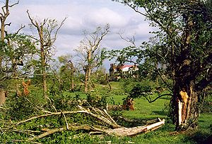 Tornado outbreak of April 15–16, 1998 - Tornado damage to trees near The Hermitage