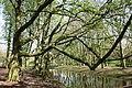 Herne - Schlosspark Strünkede 36 ies.jpg