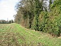 High hedge field boundary - geograph.org.uk - 1583959.jpg