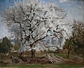 Hill - Apple Tree in Blossom.jpg