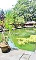 Holy Water Temple Ubud, Bali, indonesia - panoramio (21).jpg