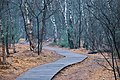 Holzbohlenweg durch das Moor - Venner Moor.jpg