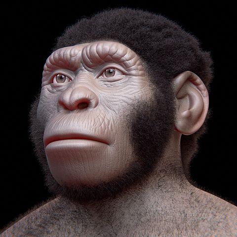 Reconstrucción facial del Homo naledi
